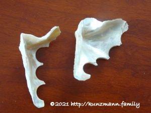 Reste von Perlmuttmuscheln aus denen Hemdknöpfe gedreht wurden - Mai 2009